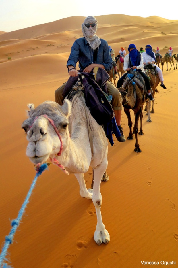 Greg on the camel