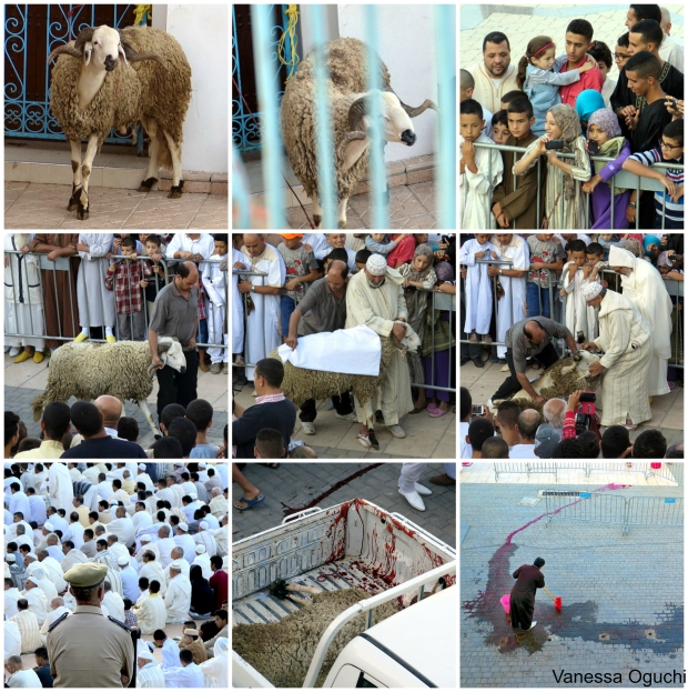 The stages of the sheep sacrifice