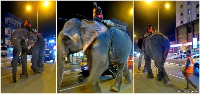 Only in India will you see a random elephant walking through traffic!
