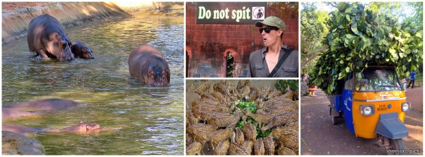 Do not spit at the zoo.